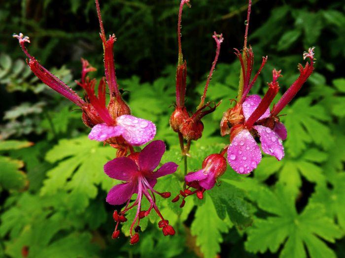 Flora impresionante