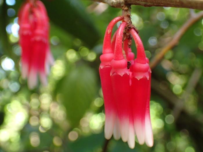 Flora de bosque húmedo en el volcán Maderas, isla de Ometepe
