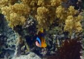 Mar Rojo, Jordania