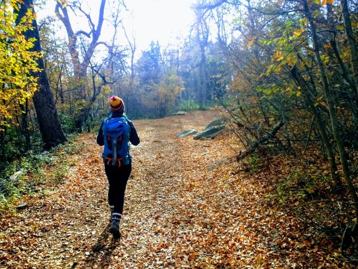 El otoño va dando lugar al invierno, camino del Enladrillado