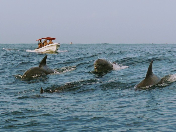 Nadando con delfines en la playa de Kizinkazi