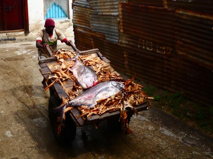 Tráfico de pescado en Stonetown
